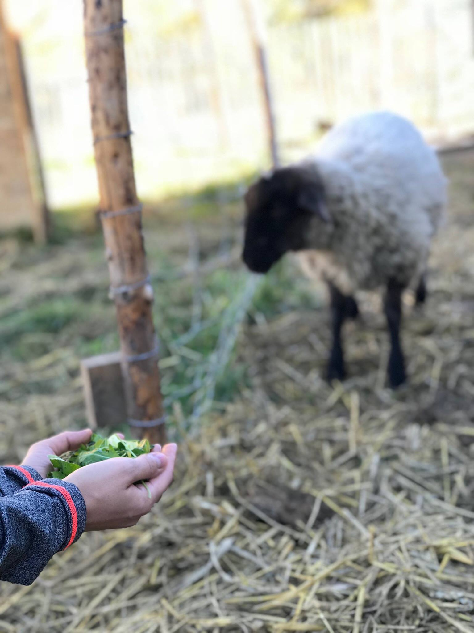 kodex farmy nadeje